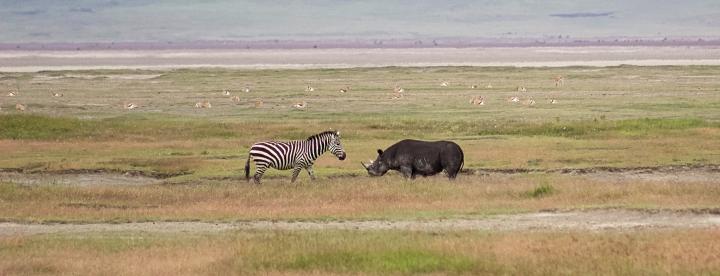 Black Rhino on safari in Tanzania