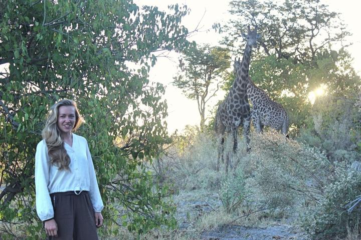 Wild giraffes Botswana