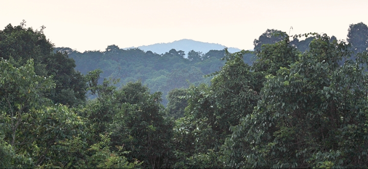 Dense forest at Khao Yai National Park Thailand