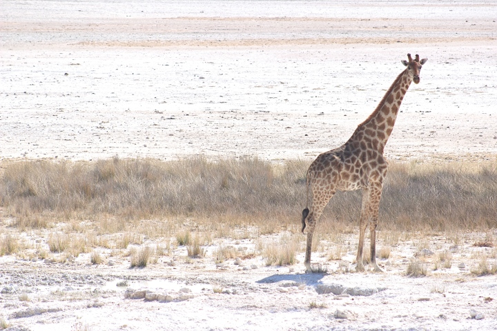 Best Safari in Namibia – Etosha National Park
