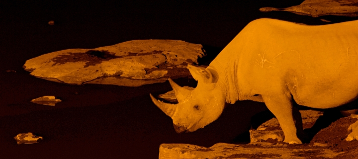 White rhinos by the watering hole at night Namibia