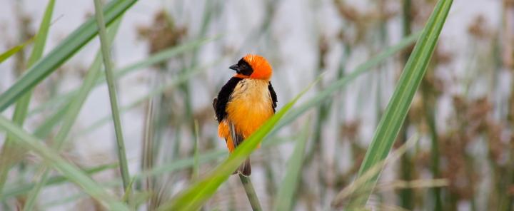 Colourful birds Ngorongoro Crater Tanzania